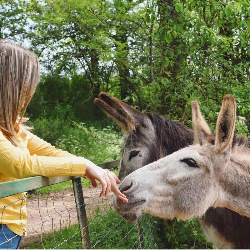 Des nouvelles de Lys et Prune ! Nos deux stars de l'année passée sont en grandes vacances pour encore de longs mois.😉  Elles sont en pleine forme et même un peu trop puisqu'elles ont récemment démoli une clôture pour rejoindre un groupe de chevaux dans une autre prairie. Leur compagnie devait leur manquer puisqu'elles avait été avec des chevaux auparavant 😂🌿  Bref, tout va bien pour ces deux miss qui cèdent leur place à Bohème qui va rejoindre la traite dès la semaine prochaine. 😍 . . . . #anesse #laitanesse #aveyron #nature #cosmetiquenaturelle #laitdanesse #rodez #agriculture #evaness #evanesscosmetique