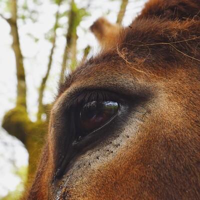 Alerte🚨Reprise des tests sur les animaux ?!  Après des années de combat, en 2004 l'Union Européenne décide d'interdire l'expérimentation des produits cosmétiques sur les animaux.💉🍃(il était temps !)  Puis en 2009, les tests d'ingrédients cosmétiques et enfin en 2013 l'interdiction de vendre dans l'Union Européenne des cosmétiques testés sur les animaux. 🙌  Mais depuis quelques semaines l'ECHA (Agence Européenne des produits chimiques) réclame le retour des tests sur animaux pour certains ingrédients cosmétiques….   Inadmissible selon nous ! Les animaux sont des êtres sensibles qui méritent le respect. 🍃 Nous soutenons les associations qui militent pour protéger les lois en faveur de la cosmétique sans tests sur les animaux. 💛 . . . .  #cosmetiquenaturelle #bienetreanimal #pasdetestsurlesanimaux #crueltyfree #laitanesse #evaness #aveyron #anesse #rodez #evanesscosmetique